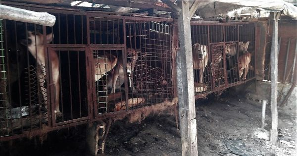 Yangsan, South Korea, Shut down the illegal dog farms!