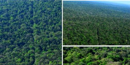 Proteja o Parque Nacional do Iguaçu e as Unidades de Conservação brasileiras
