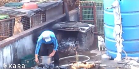 수원지방검찰청:용인동물학대자의 강력한 처벌을 요구합니다!