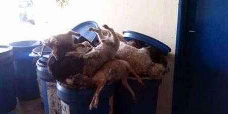 Presidente da Câmara dos Deputados - Deputado Eduardo Cunha: Moralização dos CCZs do Brasil e CPI dos Animais