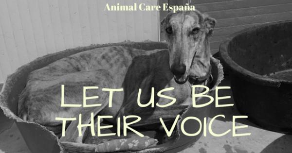 Ministerio de Medio Ambiente, Agricultura y Pesca y Alimentación : Jachthonden zijn ook honden!