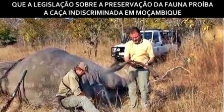 Que a legislação sobreconservaçãoda faunaproíbao turismo de caça emMoçambique.