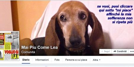 ai veterinari, ai parlamentari, alle assoc. animaliste e dei consumatori : rivedere il caso di Lea e agire contro la mal