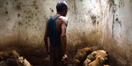 Presidente de China Xi Jinping: Eliminar la matanza de perros para consumo humano