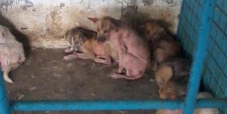 Councillor Hazel Noonan: This is how Galati, Romania treats dogs - Coventry's twin town.