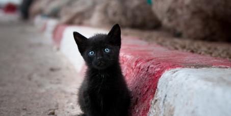 Assine a Petição: Disponibilização de castração gratuita para cachorros e gatos em Diamantina-MG