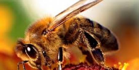 El Conseller de Medio Ambiente del Govern Balear, Gabriel Company: Le pedimos que no fumigue las abejas de Eivissa y Formentera