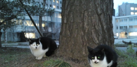 To University of Fukui: Stop starving the cats who live on campus. 福井大学に対する嘆願書:キャンパス内の猫を飢えさせるのは止めてください!