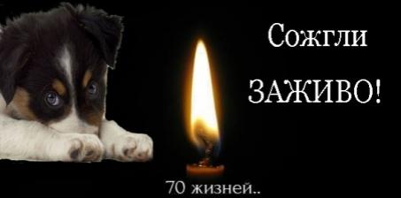 Мер Киева - Виталий Кличко: Спасите бездомных животных.