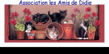 SNCF: Secouons la SNCF pour aider les chats libres dans les gares !
