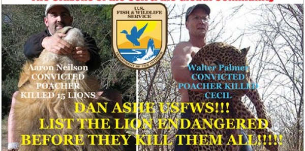 Director Dan Ashe USFWS: List the LION as ENDANGERED now please!