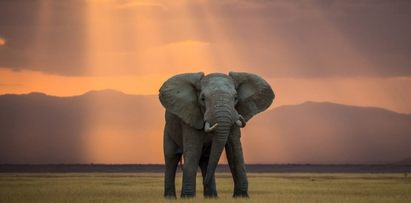 FBI (Federal Bureau of Investigation USA): Investigate CITES (Convention on International Trade in Endangered Species)