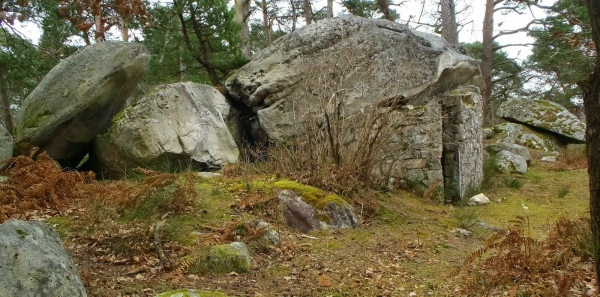 Aux grimpeurs de la forêt de Fontainebleau: Pour le respect de notre patrimoine commun