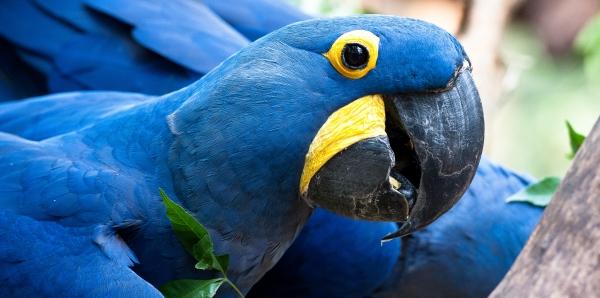 Congreso Nacional de Brasil: ¡No quite la protección con la que cuentan las especies en peligro!