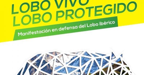 Comunidades Autónomas españolas: Salvar al Lobo Ibérico. Protección inmediata y sin excepciones.