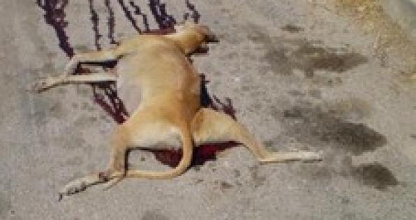 Ambassadeur d'Espagne à Paris: Protection pour les Galgos et autres chiens de chasse.