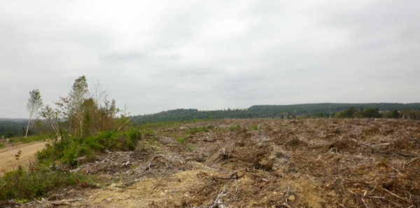 Gouvernement du Nouveau Brunswick: Sauver ce qui reste de notre forêt Acadienne!