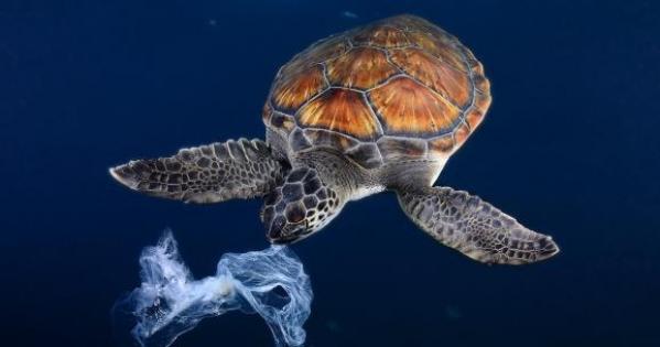 Les institutions de la Nouvelle-Calédonie: Pour une interdiction des sacs plastiques en Nouvelle-Calédonie