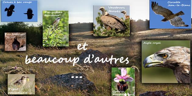 La biodiversité du Causse du Larzac a besoin de vous: