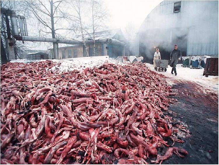 Hong Kong: Ban Fur Trade 香港: 禁止毛皮貿易 :