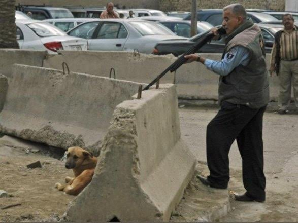 The International Community and Animal lovers EVERYWHERE: SAVE THE STRAY DOGS IN AZERBAIJAN