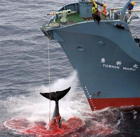 Stoppt Japans Walfang!