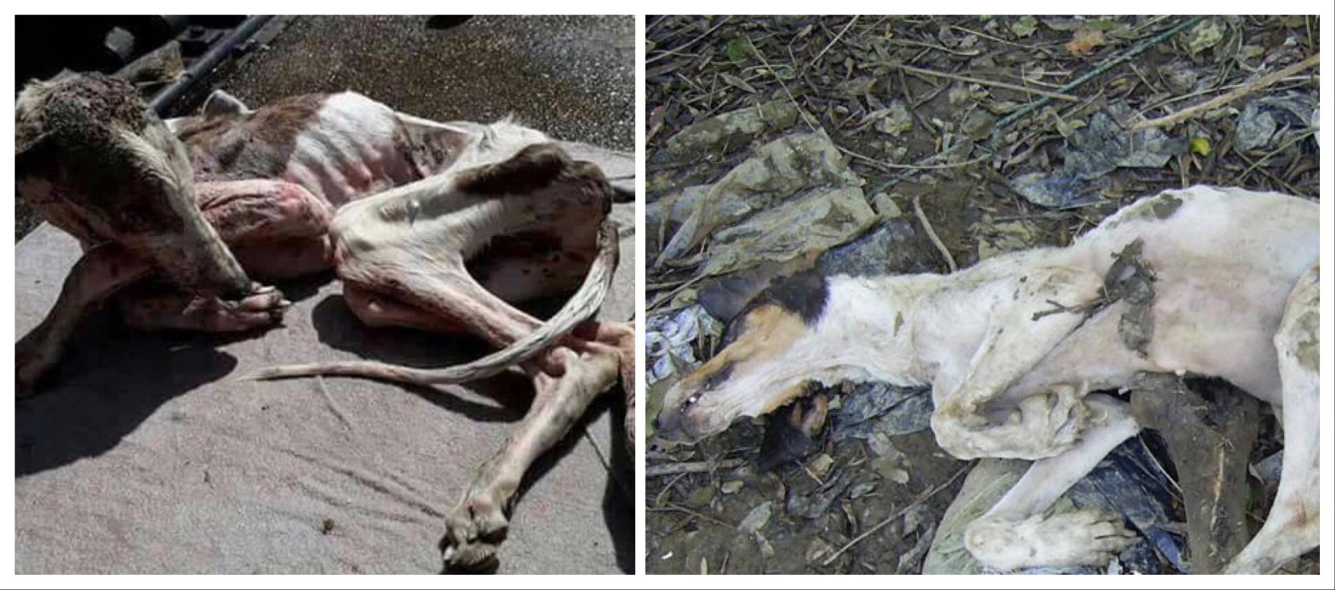 Espagne : Stop aux massacres. A David Sassoli, Président du Parlement Européen