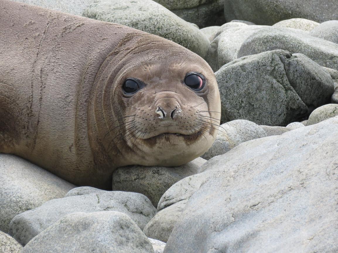 Excluyamos la salmonicultura de la Reserva de la Biosfera Cabo de Hornos