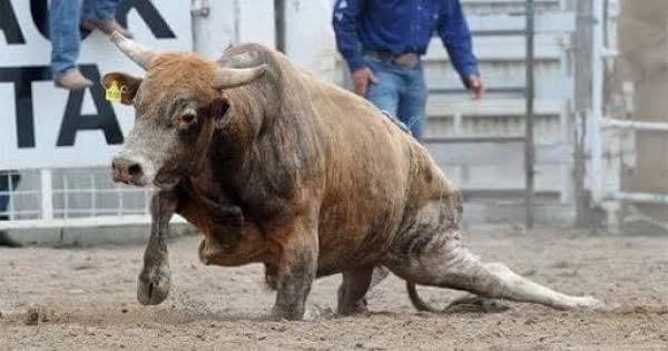 Diga NÃO a tortura animal nos rodeios!